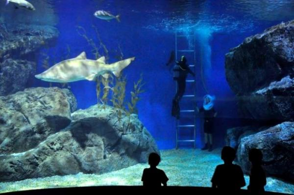 Dive with sharks in a shopping mall